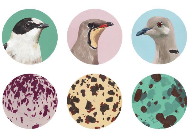 Paul Smith Bird Snaps