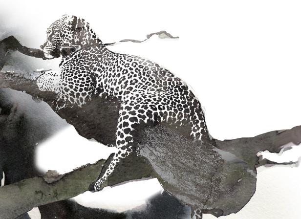 10-back-drop_editorial_leopard_in_tree.jpg
