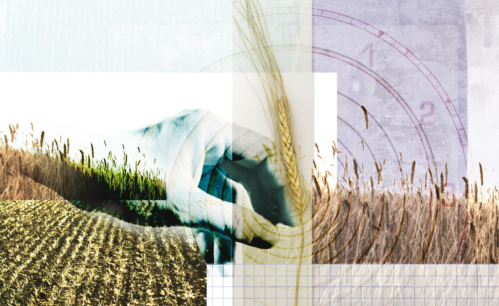 Harvest Bread Agriculture Feeding the World Ecology