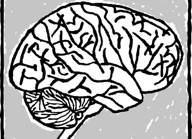 Editorial The Brain