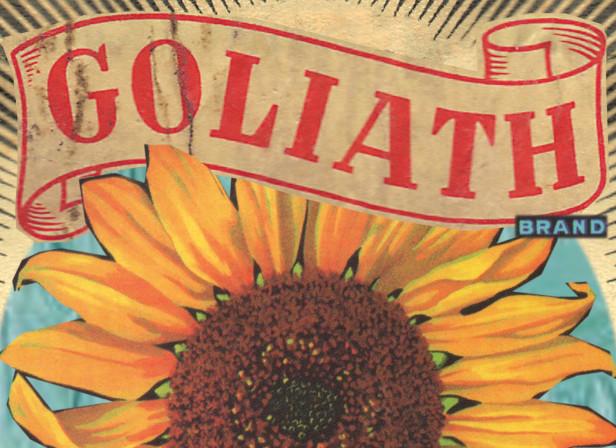 sunflower lable.jpg