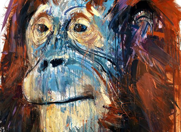 Natural Selection Orangutan