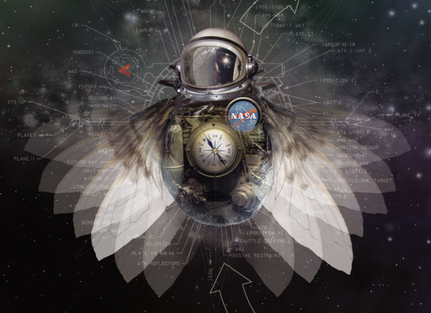 Flies In Space