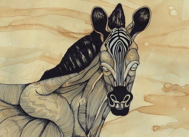 Muscle Zebra