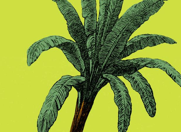 Poster for Valencia´s Botanic Garden (4º Edition)).jpg
