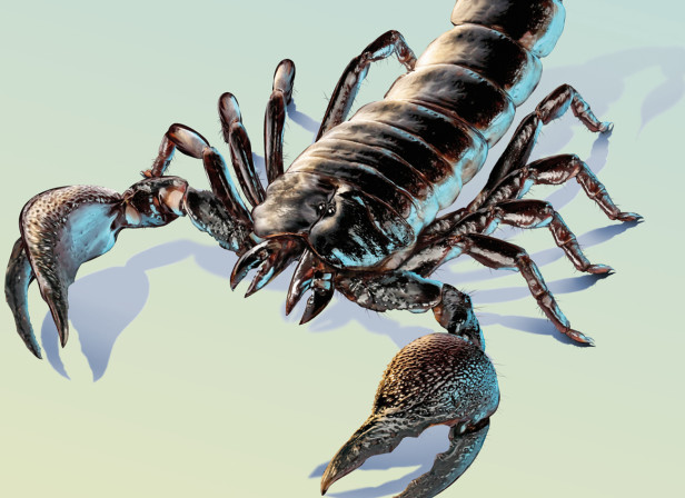 Travelex Scorpion