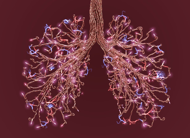 Women's Health 'How to Breath' just lungs.jpg