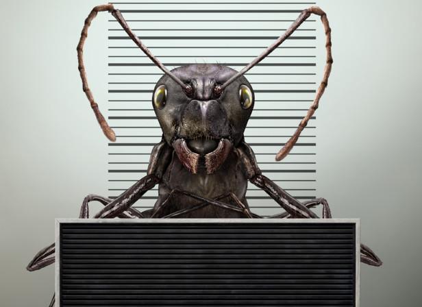 Ant Arrest