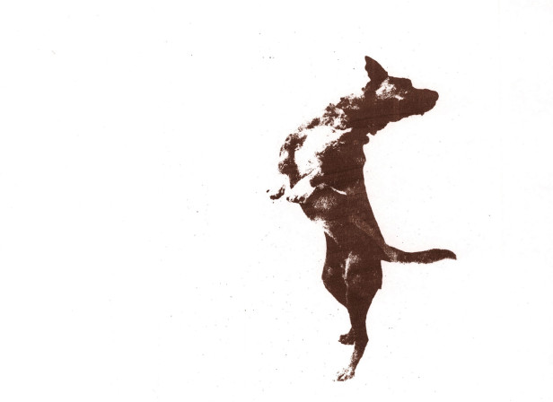 Jump Dog And Trampoline