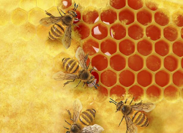Honeycomb Security Bees Honey Men's Health Magazine