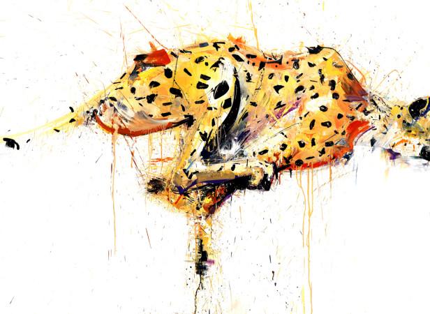 Natural Selection Cheetah