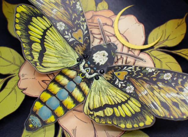 Stipple Pop - Deaths Head Hawkmoth Shadowbox - Erica Williams IV.jpg