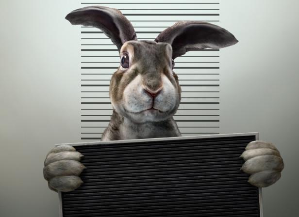 Rabbit Arrest