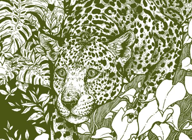 Michael Roger- Jaguar Decomposition Book- Erica Williams.jpg