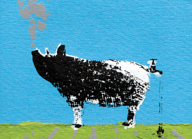 Hog Farm Pollution / John Hopkins Mag