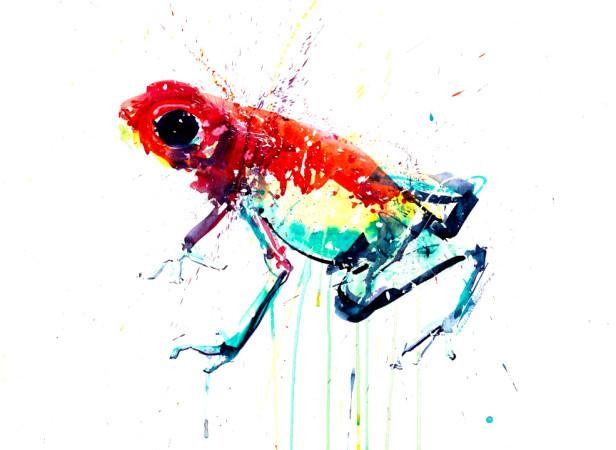 Natural Selection Frog