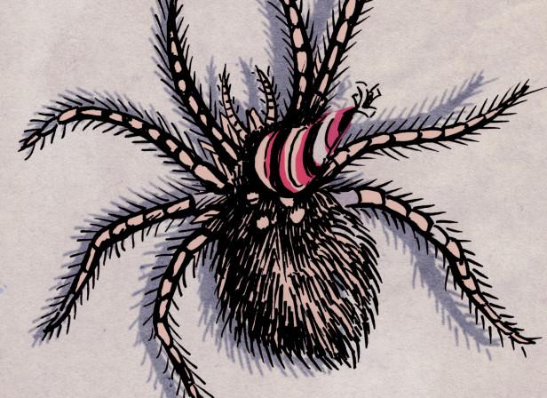 spidercardFront.jpg