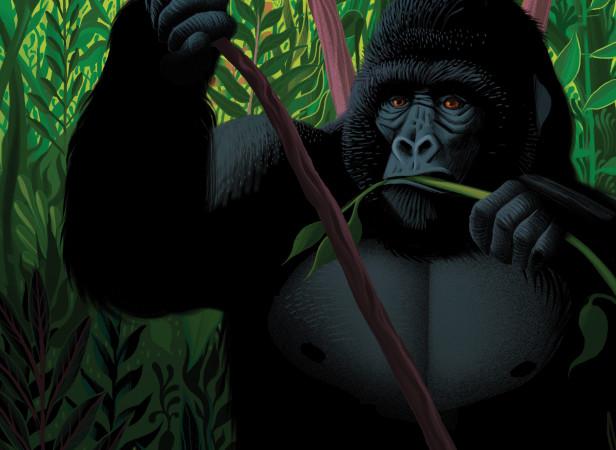Inpenetrable-Forest-of-Bwindi.jpg