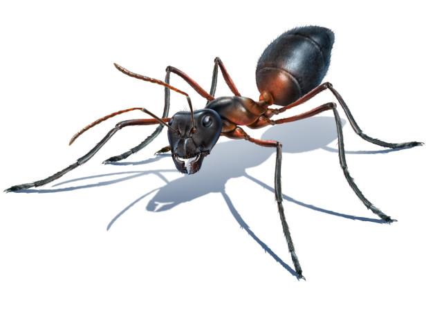 Jeff's Ant
