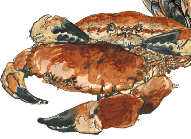 Cromer Crabs Waitrose Food Illustrated