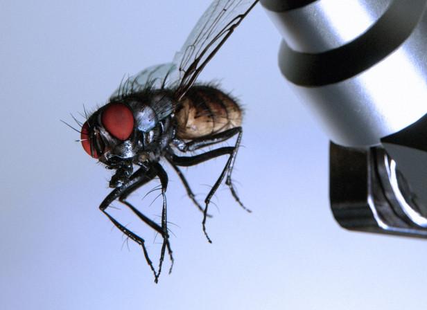 Catch The Fly Precision Robotics Cacm.acm Magazine