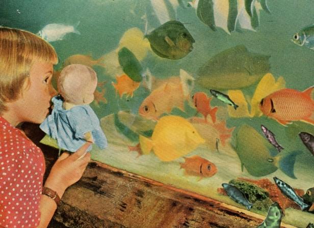 Fish 2012.jpg