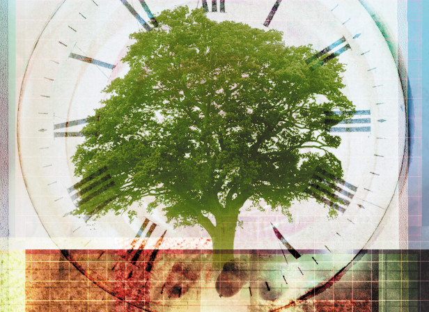 Growing An Oak From An Acorn Patience Time Passing Ecology