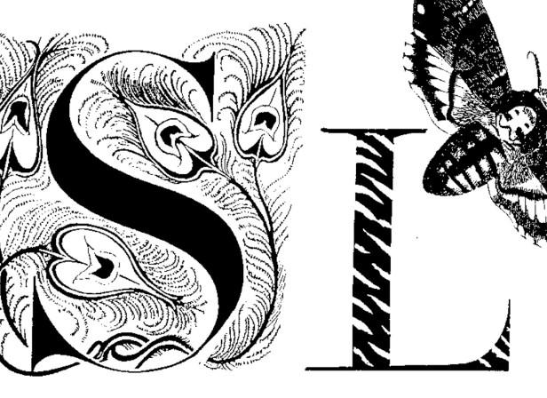 Sloth Sin Biba