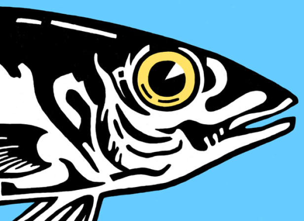 fish_out_of_water.jpg